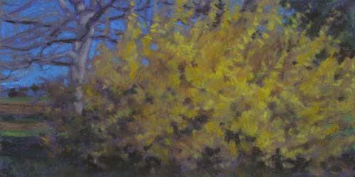 Sycamore and Forsythia<br /><small>pastel     6 x 12      $650</small>